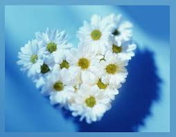 Bir çiçek olsaydınız hangisi olurdunuz ?