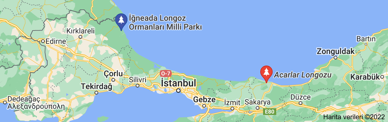 longoz haritası